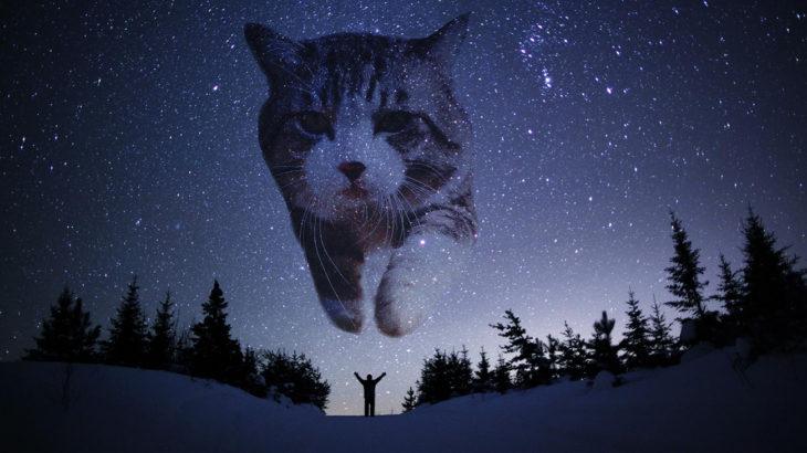 gato editado en las estrellas