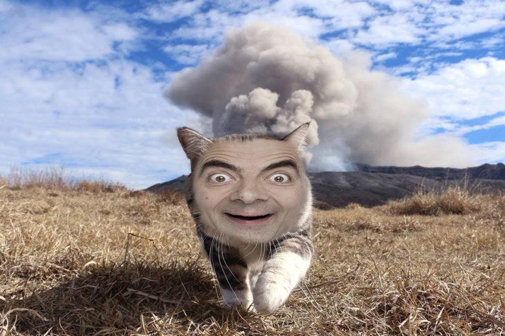 mr. bean editado en la cara de un gato