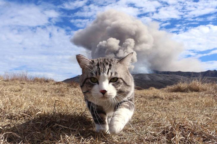 gato camina y atrás se ve una montaña con humo