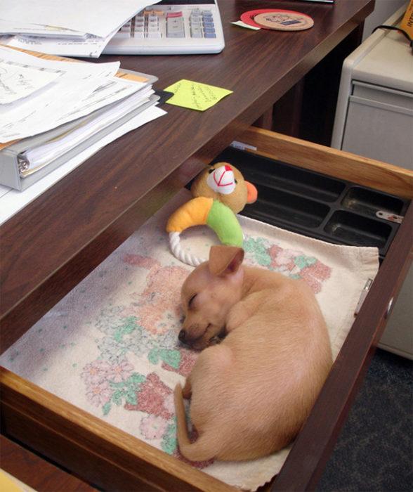 dormido en el cajón