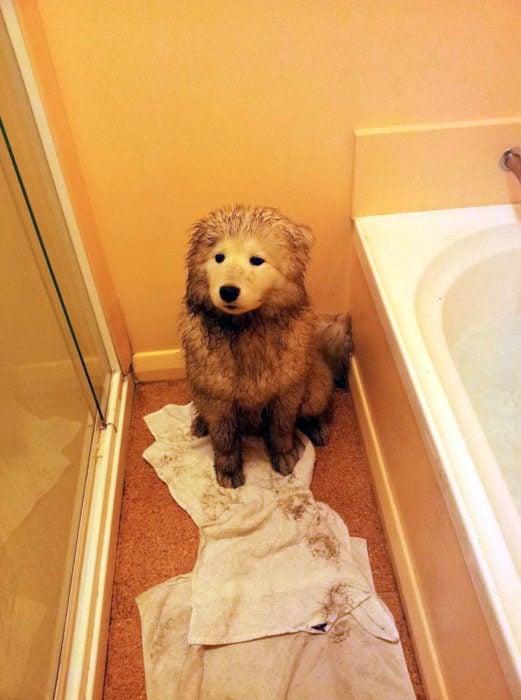 creo que ya supo que le toca baño