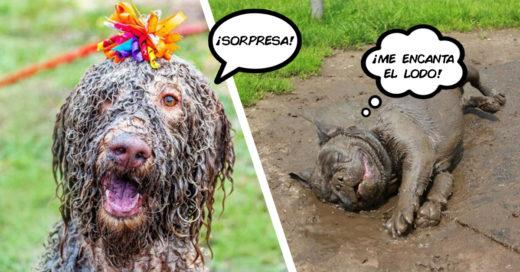 Cover Perritos a los que nunca debieron presentarles el lodo