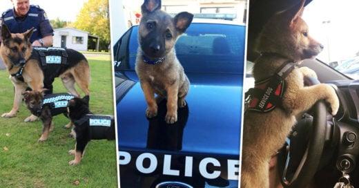 Cover Cachorros de servicio que están listos para su primer día de trabajo