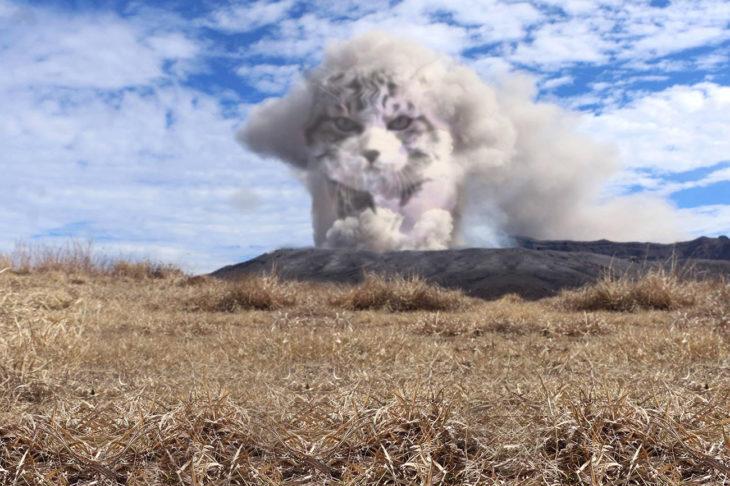 gato editado como mufasa en el humo