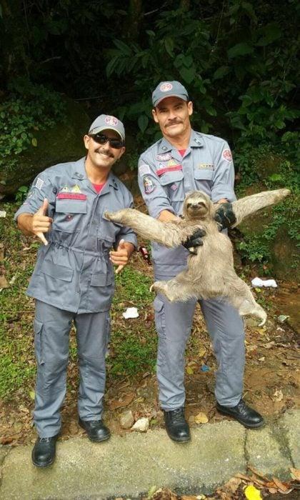 sloth 12
