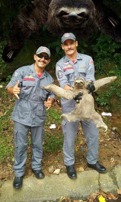 sloth16