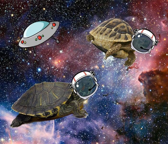 tortugas en el espacio