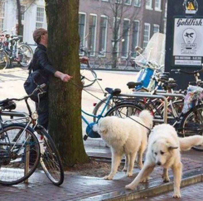 Hombre choca con árbol al salir a pasear con sus perros
