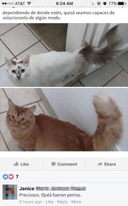 ojala que dos gatos fueran perros
