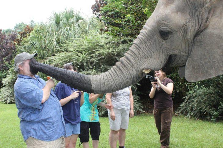 elefante con trompa en la cara de turista