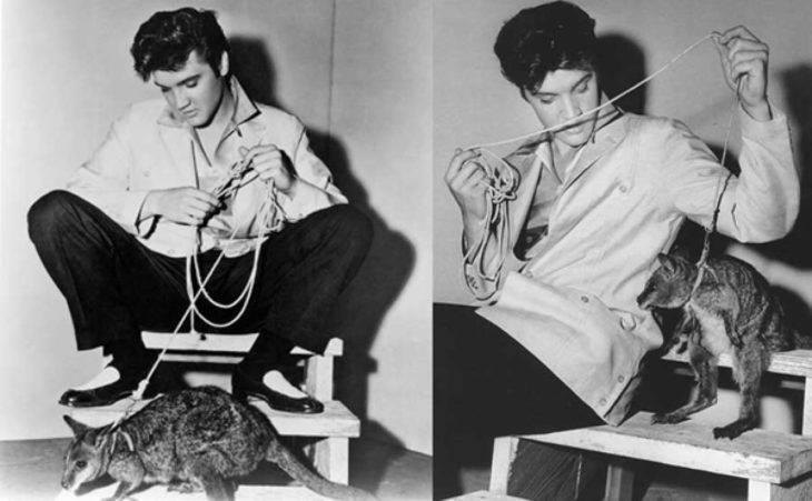 Elvis Presley con un canguro