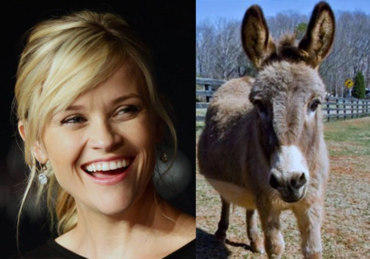 Resse Witherspoon con un burro