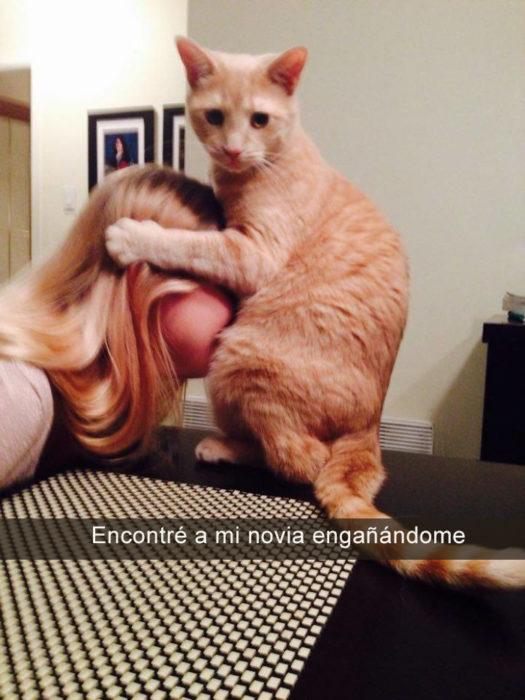 gato tomando de la cabeza a mujer