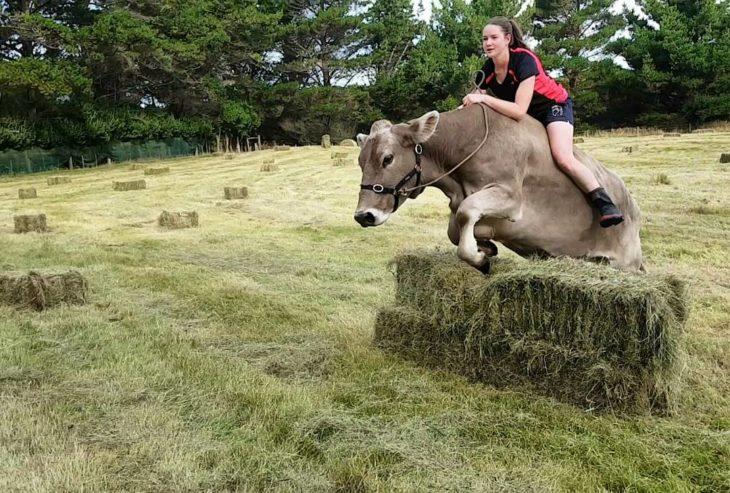Vaca salta obstáculos mientras chica la cabalga