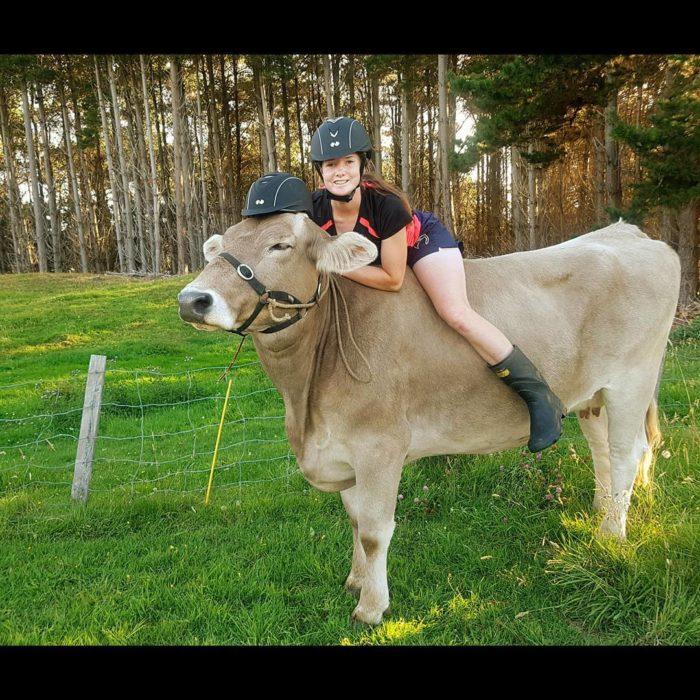Mujer montada en vaca, las dos traen casco