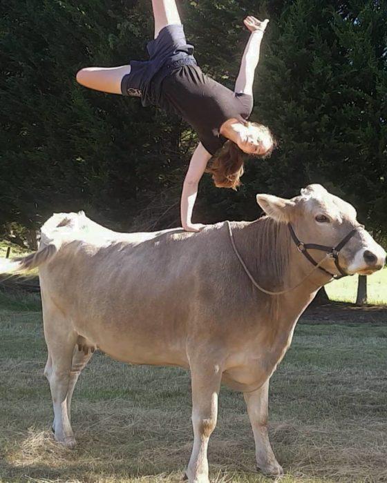 Chica hace acrobacias sobre una vaca