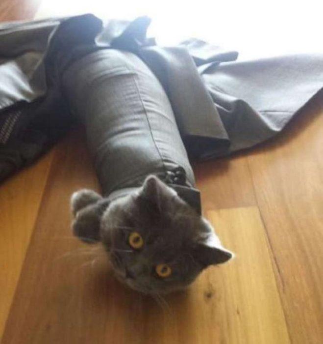 Gato atorado en la ropa