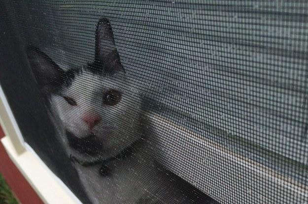 Gato con la cara atorada en la ventana