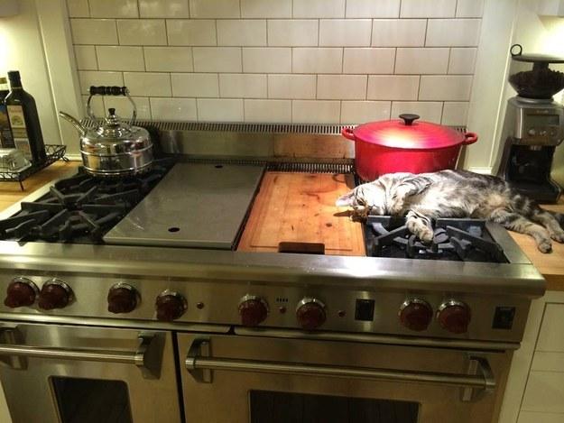 Gato encima de la estufa