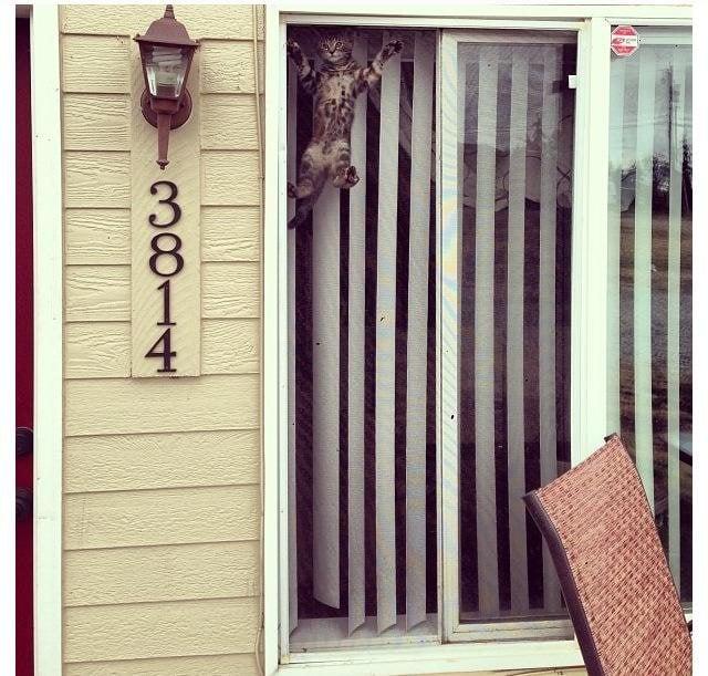 Gato trepado en mosquitero de una ventana
