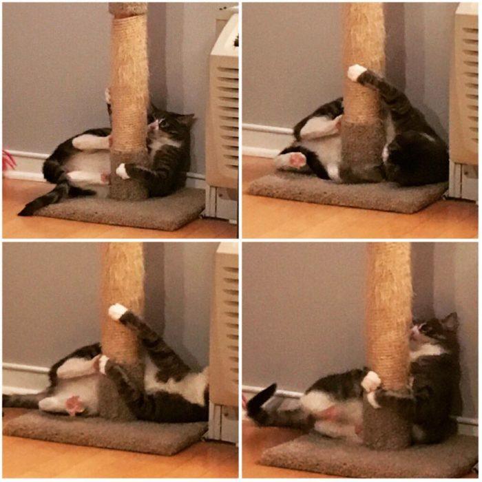 Gato atorado en su juego