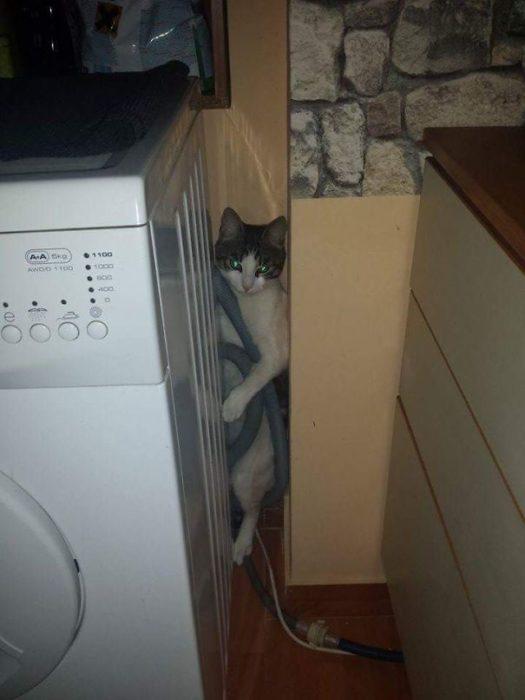 gato atorado atrás de la lavadora