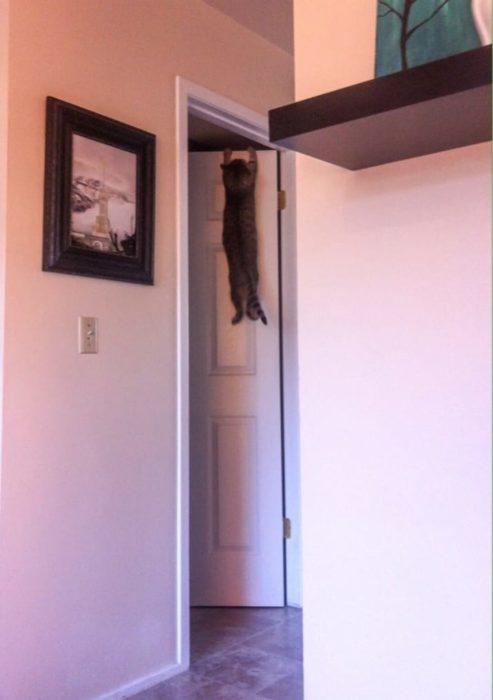 Gato colgando de la puerta