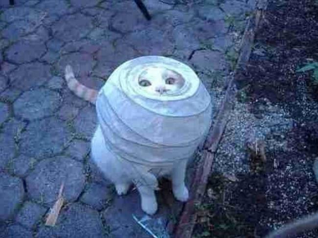 Gato atorado en lampara de papel