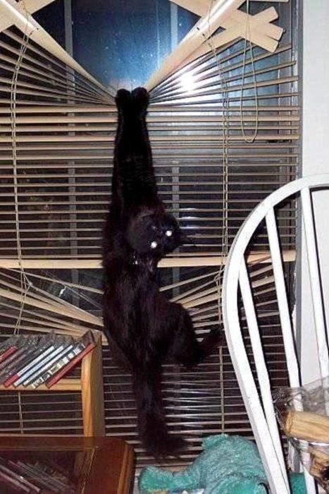 Gato colgando de las persianas