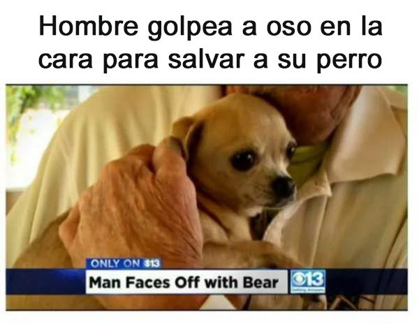 golpea a oso para salvar a su perro