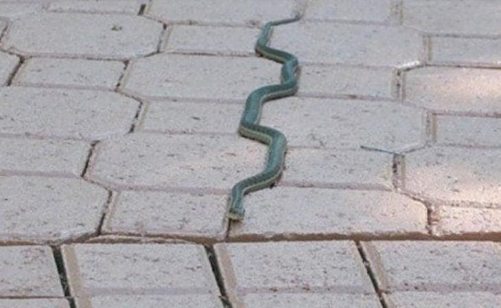 serpiente va por la línea