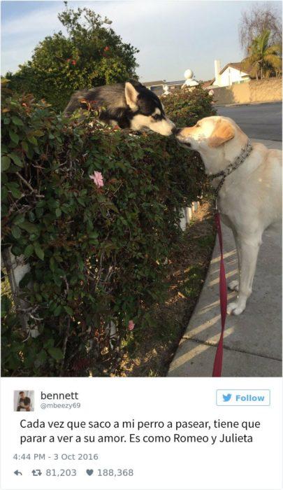 perro visita a su amada