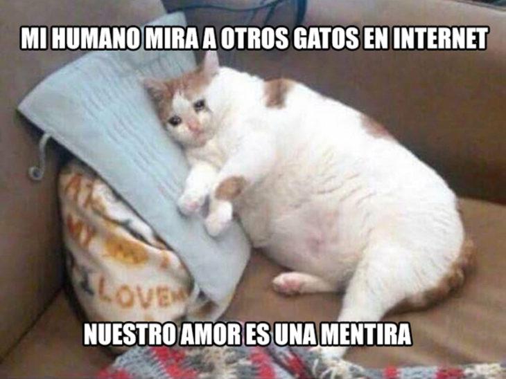 gato deprimido traición