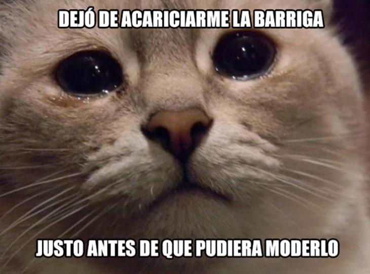 gato triste morder dueño