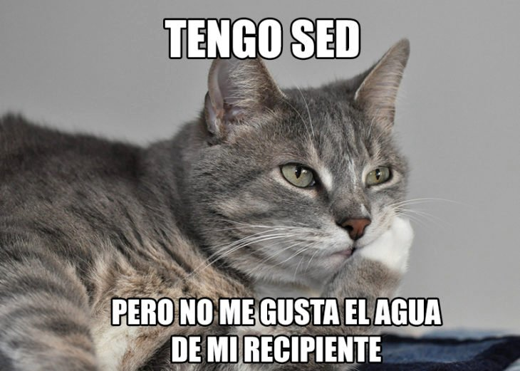gato sed problemas