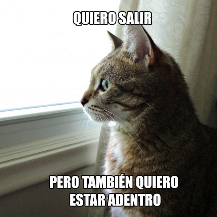 gato ir afuera