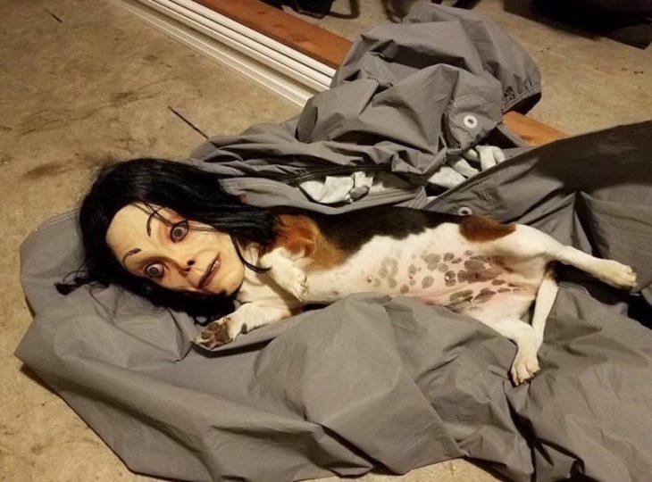 perro con mascara de Michael Jackson