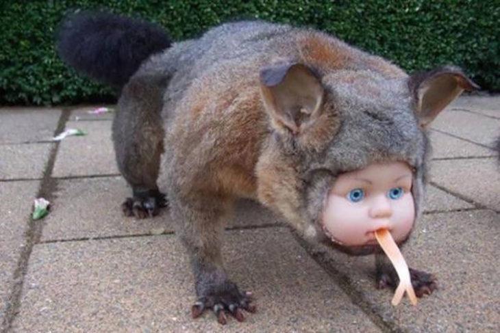 Juguete con cuerpo de animal y cara de bebé