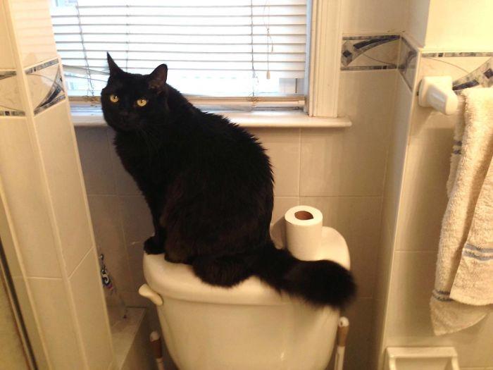 este gato no es mío