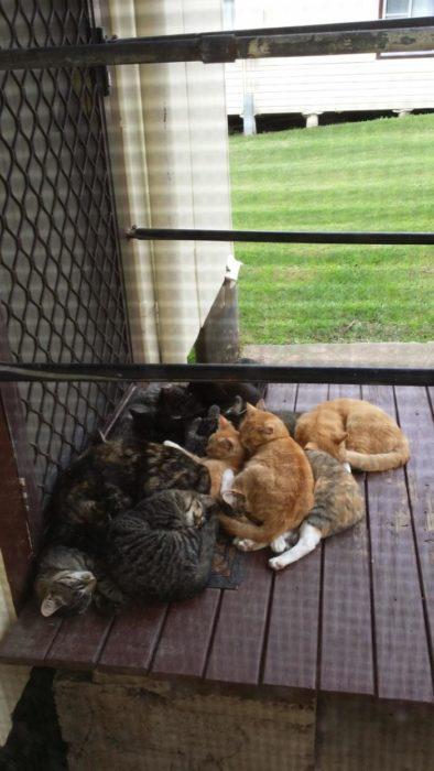 guardianes vigilando la casa