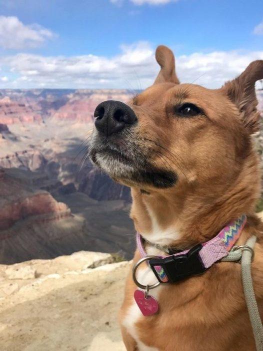 perro con cara pensativa retratado en un bello paisaje