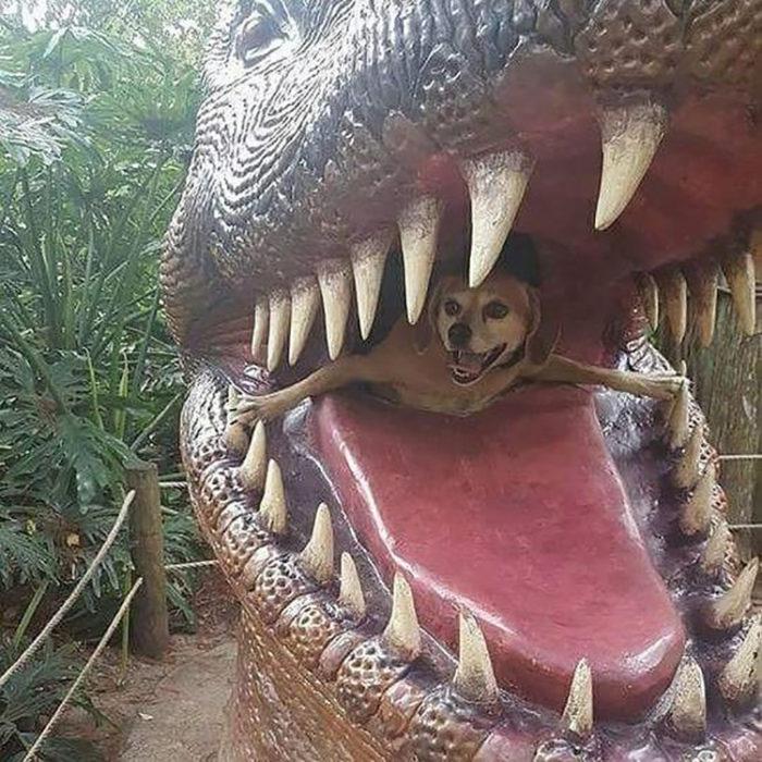 Perro saliendo del hocico de un dinosaurio