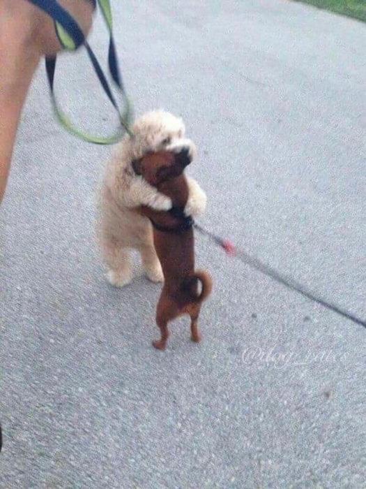 dos perros dándose un tierno abrazo