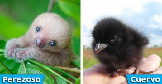 Cover Tiernos animales que no te imaginabas como lucían así de pequeños
