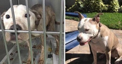 Cover Adorables imágenes que muestran la transformación de cachorros a perros adultos