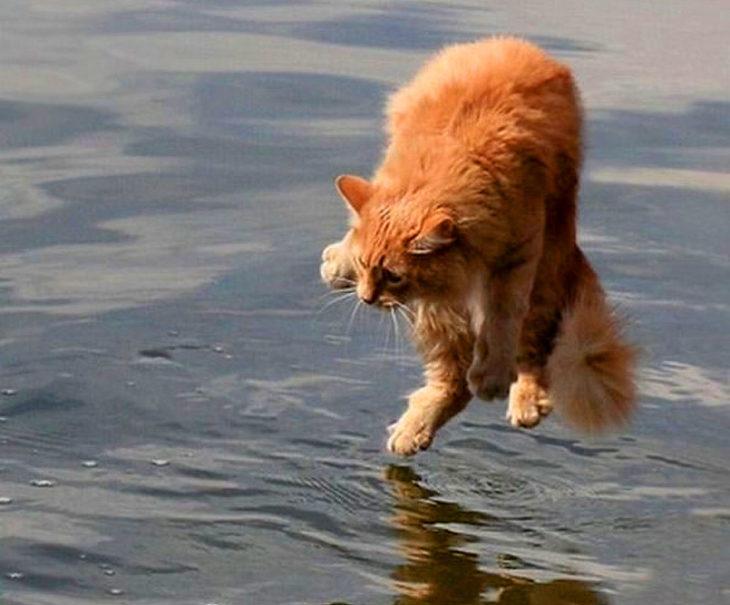 gato a punto de caer al agua