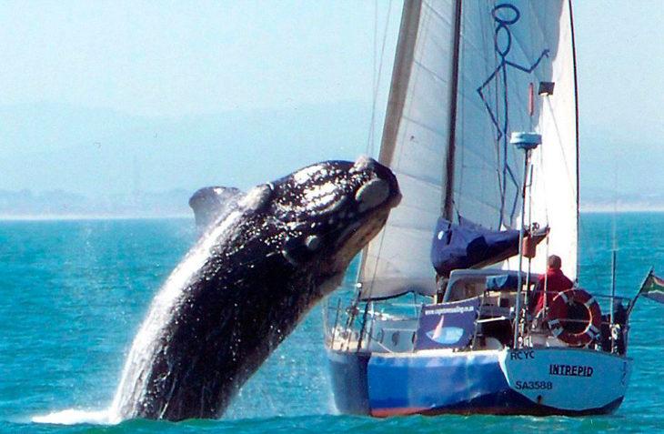 ballena fuera del agua a unos segundos de caer sobre barco