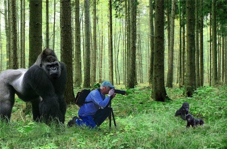 fotógrafo retratando a gorilas cachorros