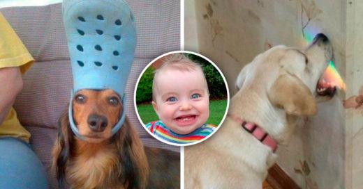 Cover animales que te harán olvidar tus problemas