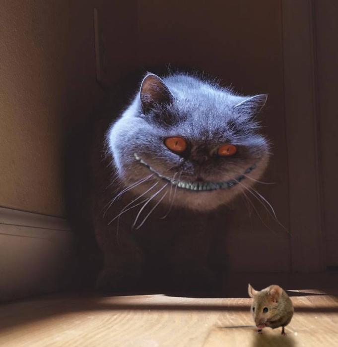 gato de alicia en el pais de las maravillas